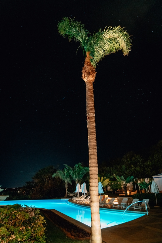 A Poolside Palm Tree at Night