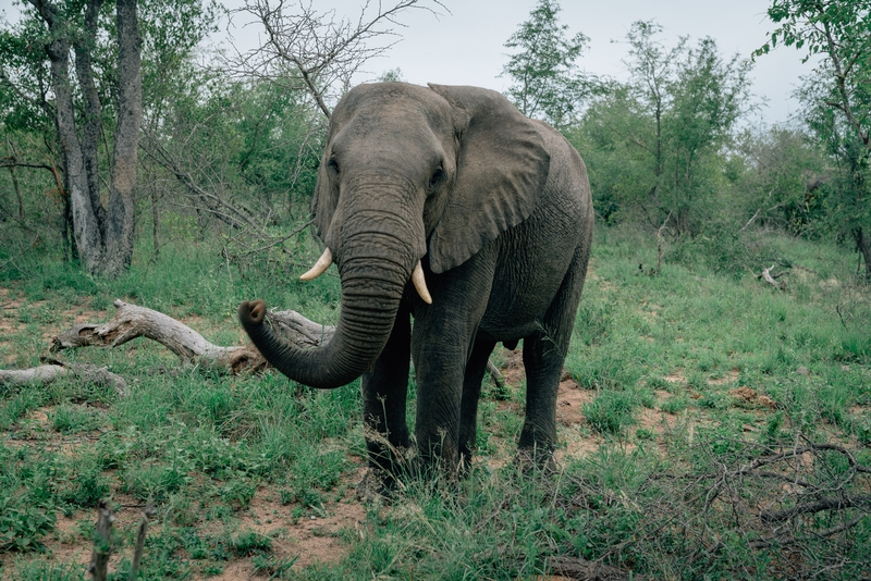 Close Encounter with an Elephant